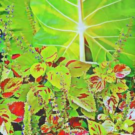 A Tropical Bouquet