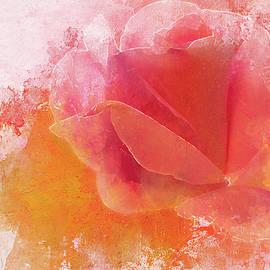 Terry Davis - A Valentine Rose