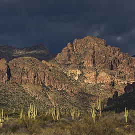 Saija Lehtonen - A Valley of Saguaros