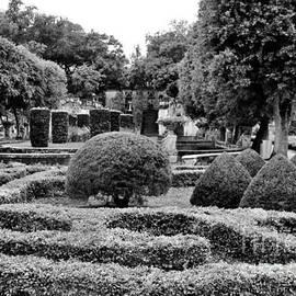 Chuck Hicks - A view of the garden 2