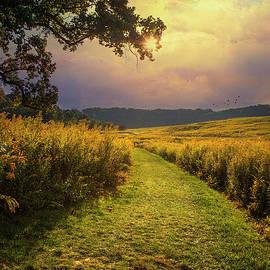 John Rivera - A Walk in Solitude