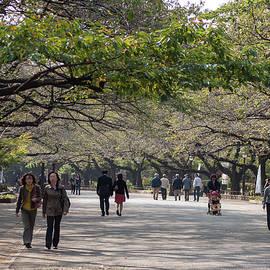 Jill Mitchell - A Walk In The Park