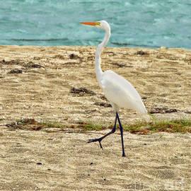 Arnie Goldstein - A Walk on The Beach