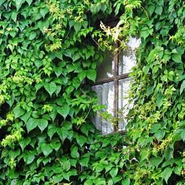Sarah Loft - A Window in Schierstein 7
