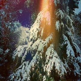 ARTography by Pamela Smale Williams - A Winter Solstice Night