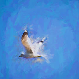 Leif Sohlman - abstract artistic Flying Gull May