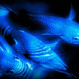 Elizabeth Abbott - Abstract Blue Fish