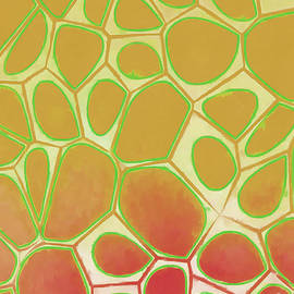 Abstract Cells II - Edward Fielding
