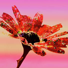 Ralph Klein - Abstract Flower In Red