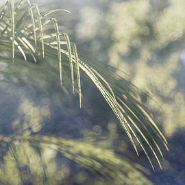 Louise Hill - Abstract Palm Frond