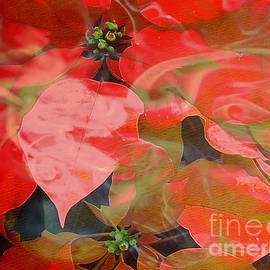 Beverly Guilliams - Abstract Poinsettia