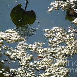 Robyn King - Abstract Reflections  #6 - Nature Art