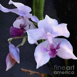 Anthony Fishburne - Acacallis cyanea. orchid