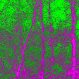 Acid Forest