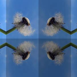 Tina M Wenger - Acrobatic Dandelions