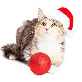 Adorable Calico Christmas Kitten - Susan Schmitz