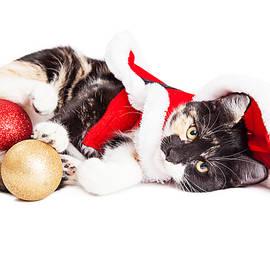 Adorable Christmas Calico Santa Kitty - Susan Schmitz