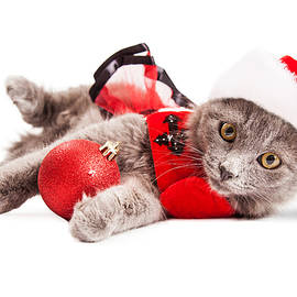 Adorable Christmas Kitten Over White - Susan Schmitz