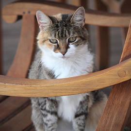 Cynthia Guinn - Adorable Tabby Cat