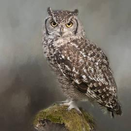 Sue Fulton - African Eagle Owl