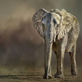 Nikolyn McDonald - African Elephant