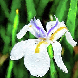 Kay Brewer - African Iris Watercolor