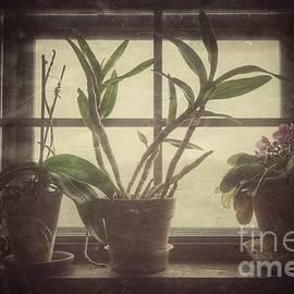 John Myers - African Violets In Window