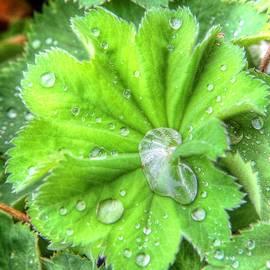 Nigel Espley - After The Rain #2