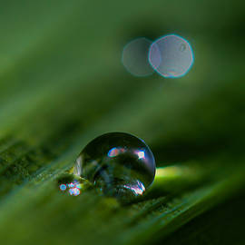 Mo Barton - After The Rain Droplet 1
