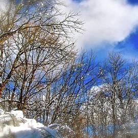 Elizabeth Tillar - After the Storm