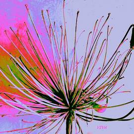 VIVA Anderson - Agapanthus - In The Pink