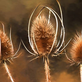 Donna Kennedy - All That Remains - Teasel