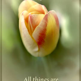 Debbie Nobile - All things are Possible