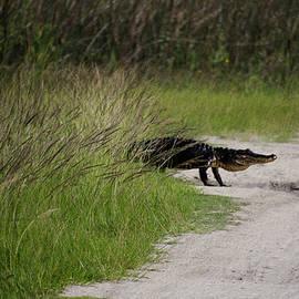 Dick Hudson - Alligator Crossing
