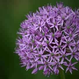 Richard Andrews - Allium