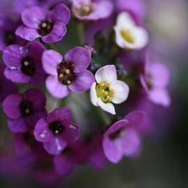 Joy Watson - Allysium Flowers