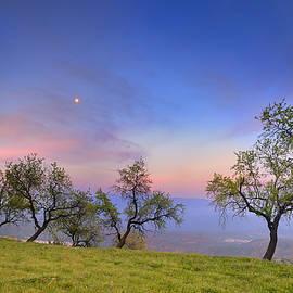 Guido Montanes Castillo - Almonds and Moon