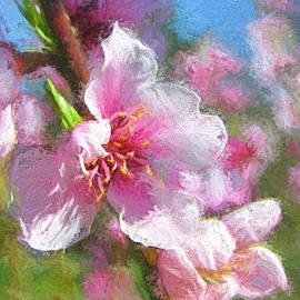 Shannon Story - Almonds In Bloom