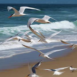 Joe Schofield - Aloft Again. Terns in Manhattan Beach