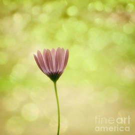 Sven Pfeiffer - Alone flower