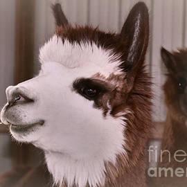 Janice Rae Pariza - Alpaca Faces