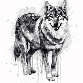 Marian Voicu - Alpha Wolf Black and White