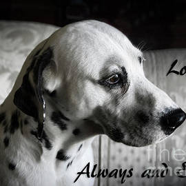 Janice Rae Pariza - Always A Loyal Friend