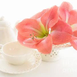 Ann Garrett - Amaryllis Teatime
