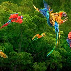 Brian Tarr - Amazon Macaws
