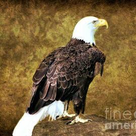 Judy Palkimas - American Bald Eagle