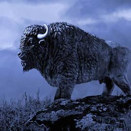 Matthew Schwartz - American Bison