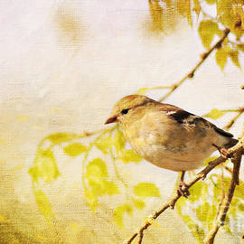 Pam  Holdsworth - American Goldfinch