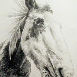 Keran Sunaski Gilmore - American Paint horse