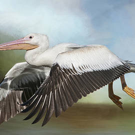 Bonnie Barry - American White Pelican in Flight